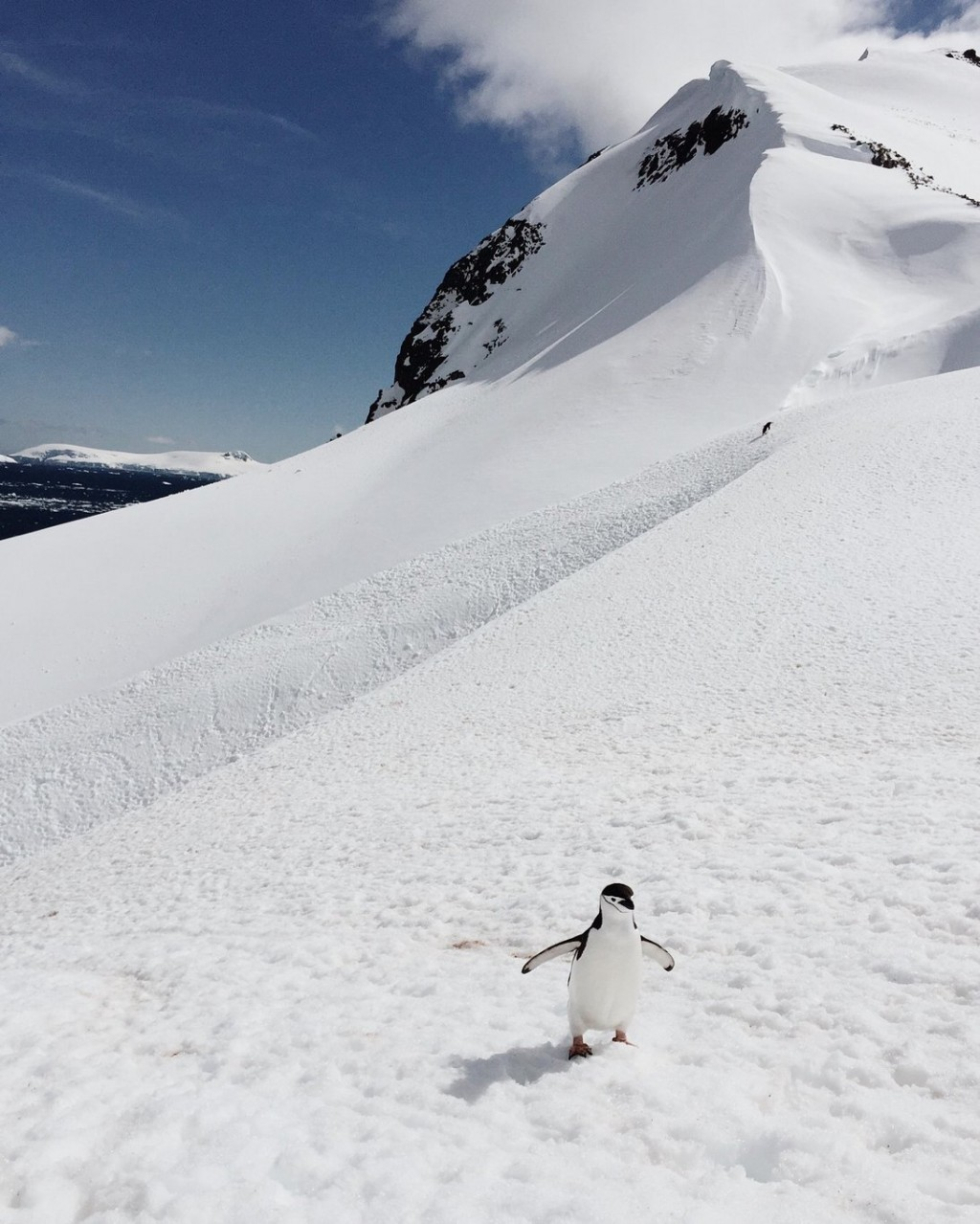 Orne Harbour Antarktis Landgang Pinguin