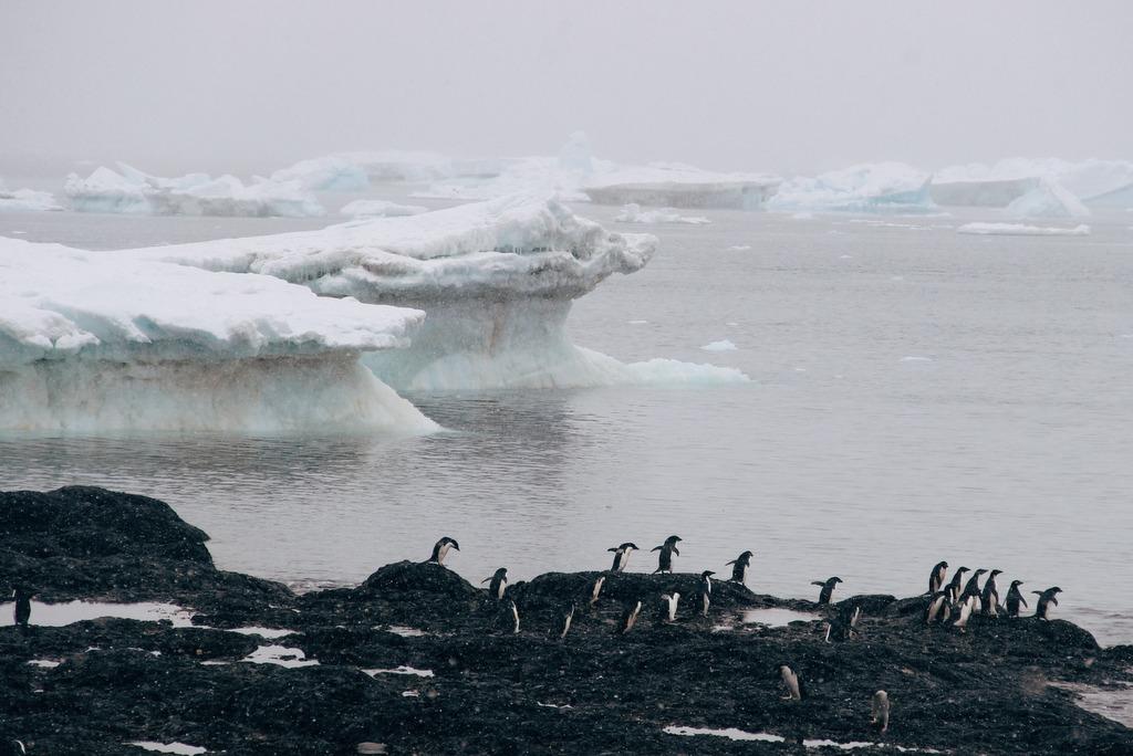 Antarktis Reise Pinguine Brown Bluff