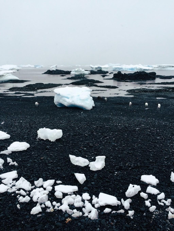 Antarktis schwarzer Strand mit Eisbergen