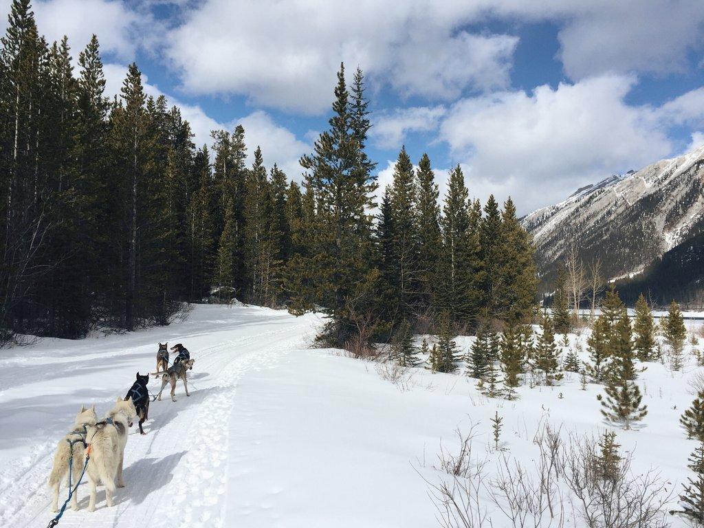Hundeschlitten Kanada Rocky Mountains