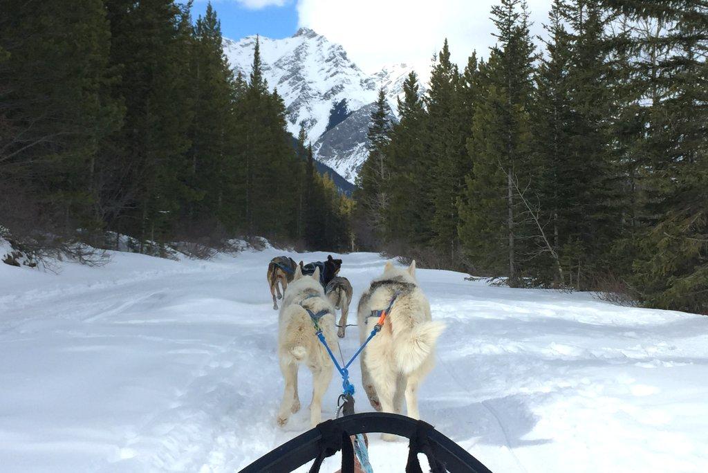 Hundeschlitten Kanada Winter Canmore