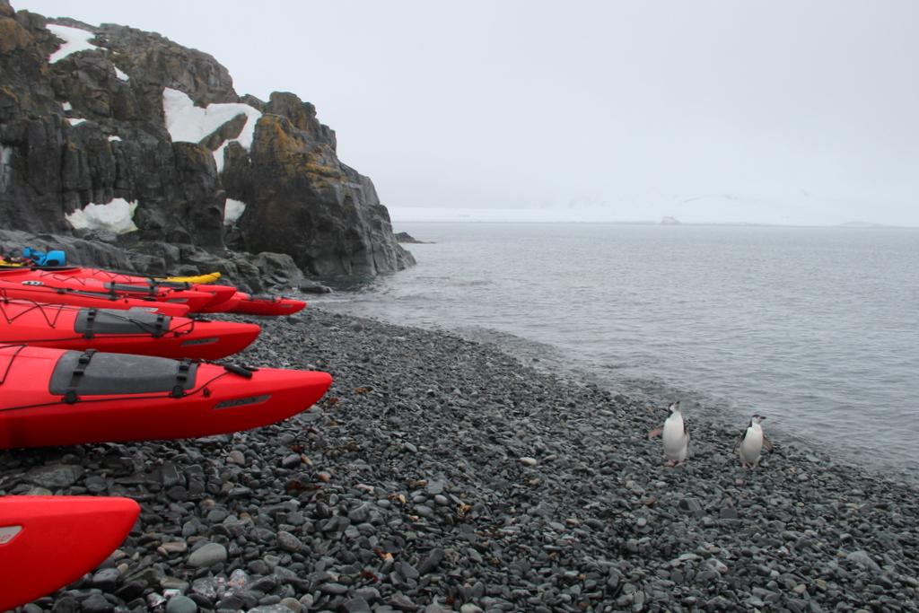 Kajaken Antarktis Pinguine