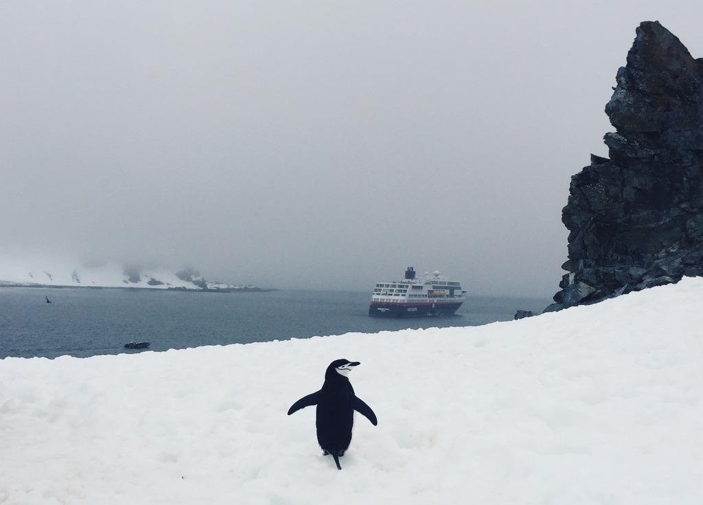Antarktis Kreuzfahrt Pinguin Hurtigruten Half Moon Island