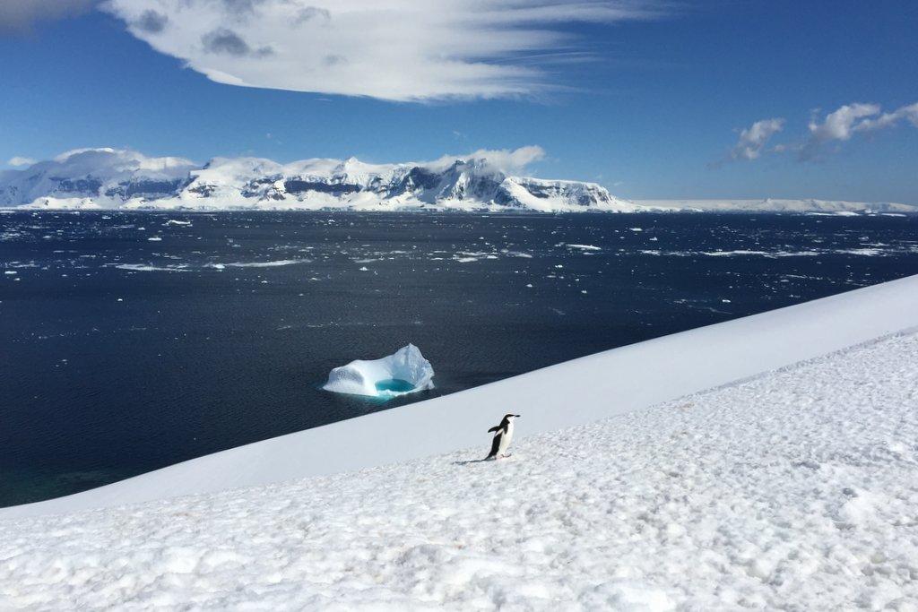 Orne Harbour Pinguin Landgang Antarktis