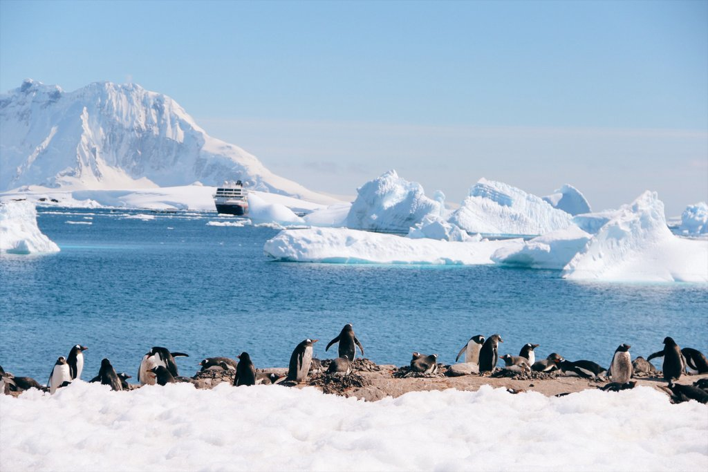 Cuverville Island Pinguinkolonie Brutplatz Antarktis