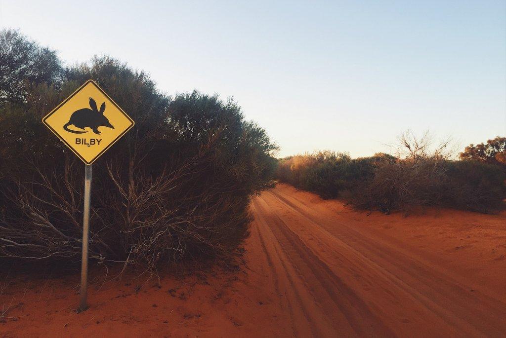 Bilby Strassenschild Westaustralien