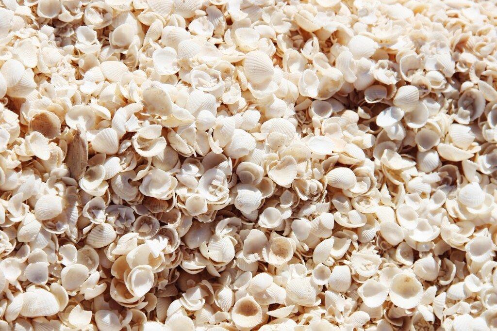 Muscheln Shell Beach Westaustralien Denham