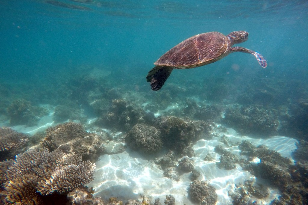 Schnorcheln-Ningaloo-Reef-Exmouth-Australien