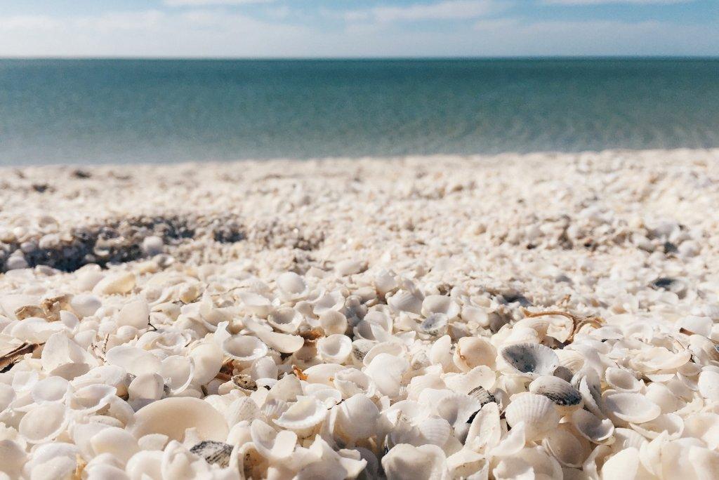 Shell Beach Westaustralien
