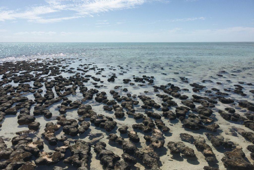 Stromatolithen Hamelin Pool Westaustralien