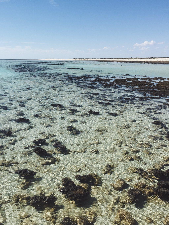 Shark Bay Westaustralien Highlights