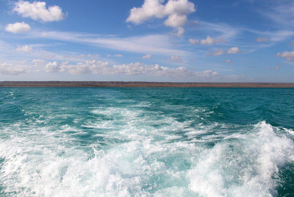 Walhai schwimmen Live Ningaloo
