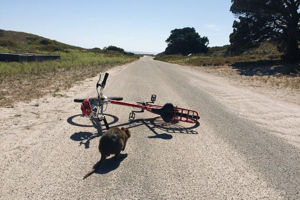 Rottnest Island Fahrrad Australien