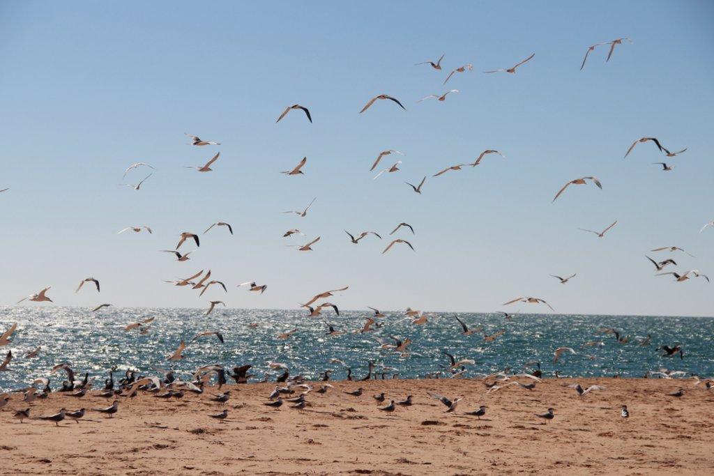 Voegel Strand Westkueste Australien