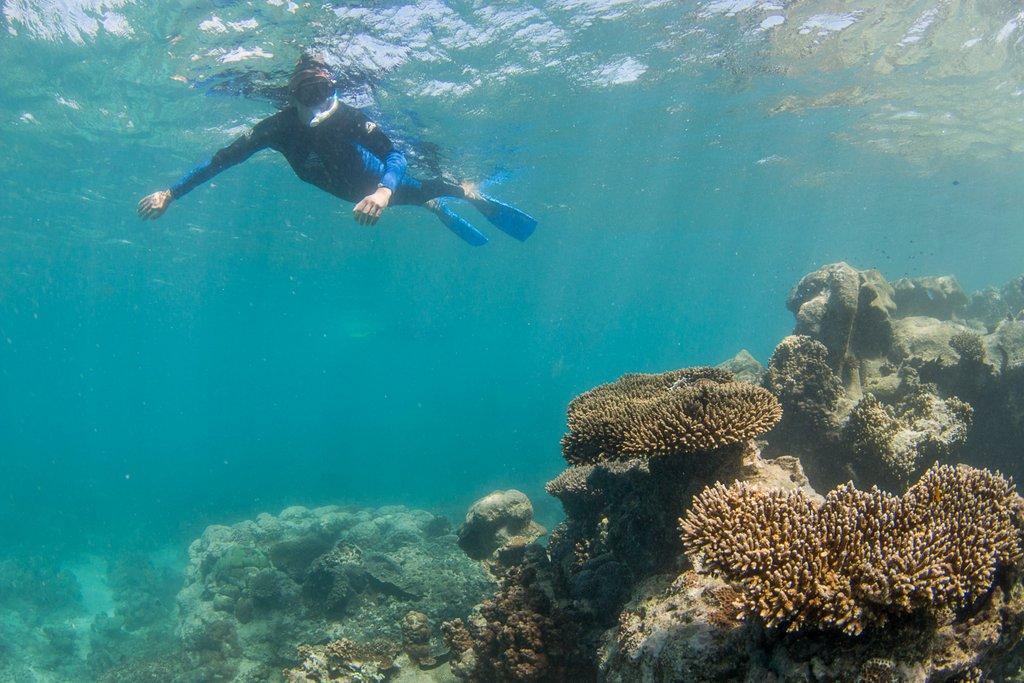 Schnorcheln Australien Ningaloo Reef