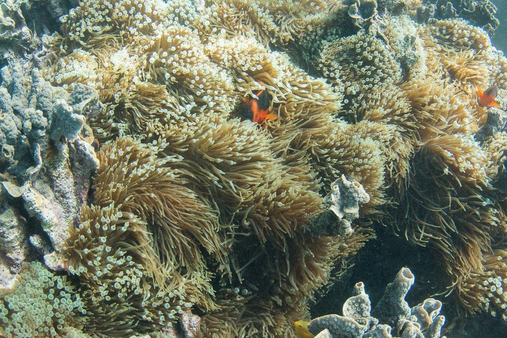 Schnorcheln Ningaloo Reef Westaustralien