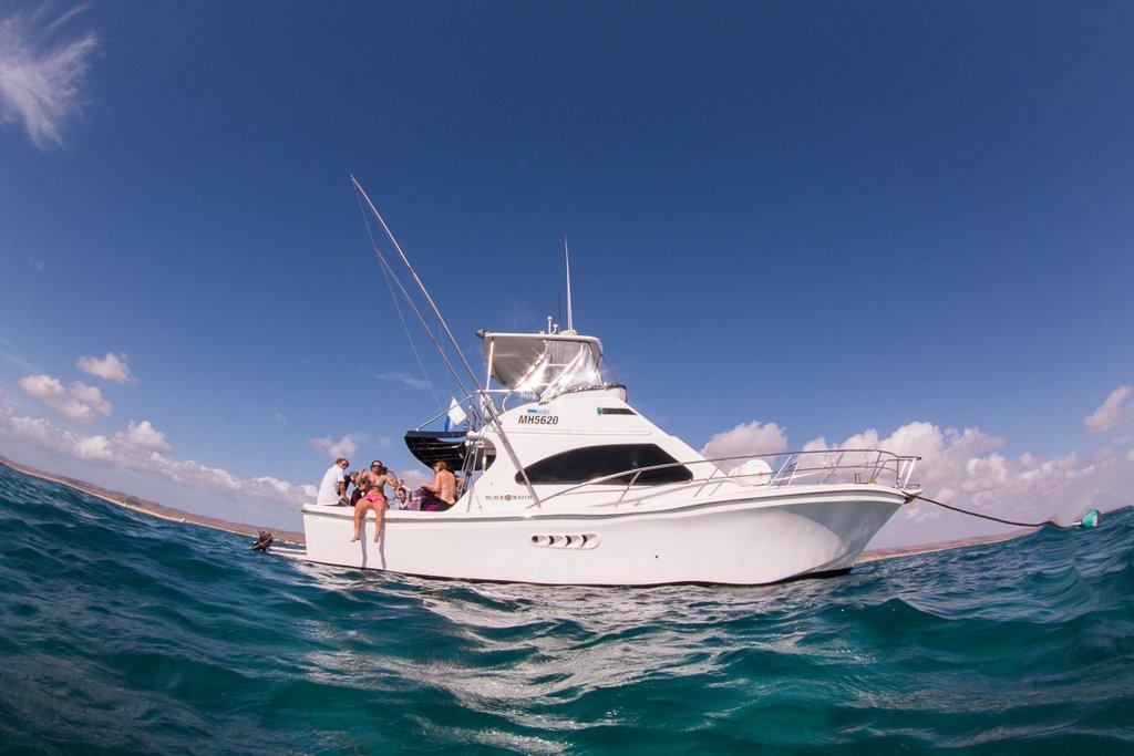 Walhai schwimmen Boot Live Ningaloo Australien
