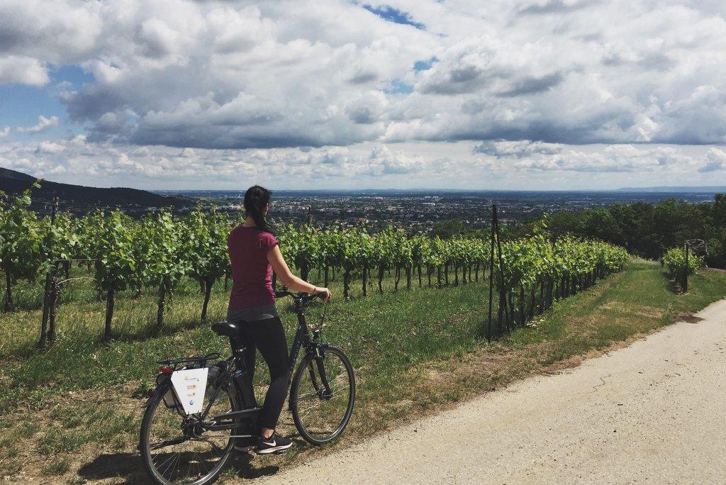 Baden bei Wien Weinberge ebike