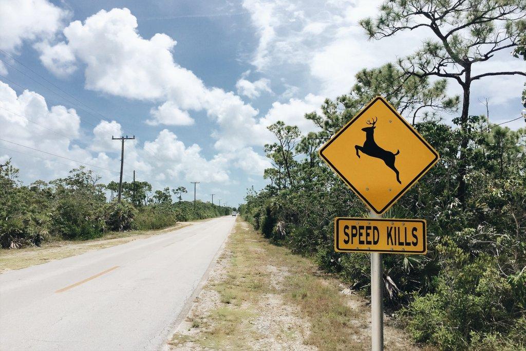 Key-Deer-Big-Pine-Key-Florida-Keys-Tipps