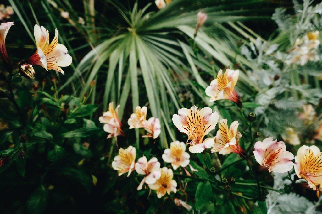 Bretagne-botanischer-Garten-Ile-de-Batz