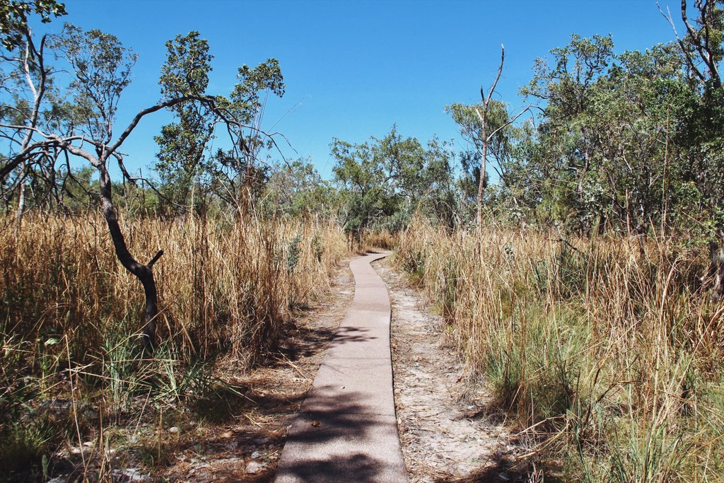 Bush-Walk-Litchfield-Nationalpark-Australien