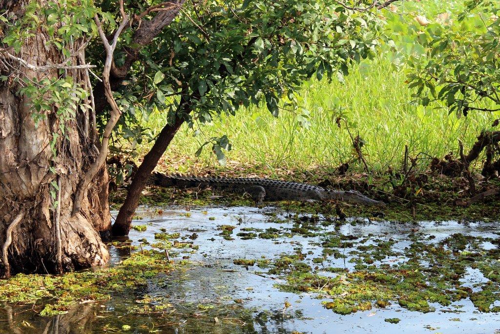 Kakadu Nationalpark Australien Highlights Bootsfahrt