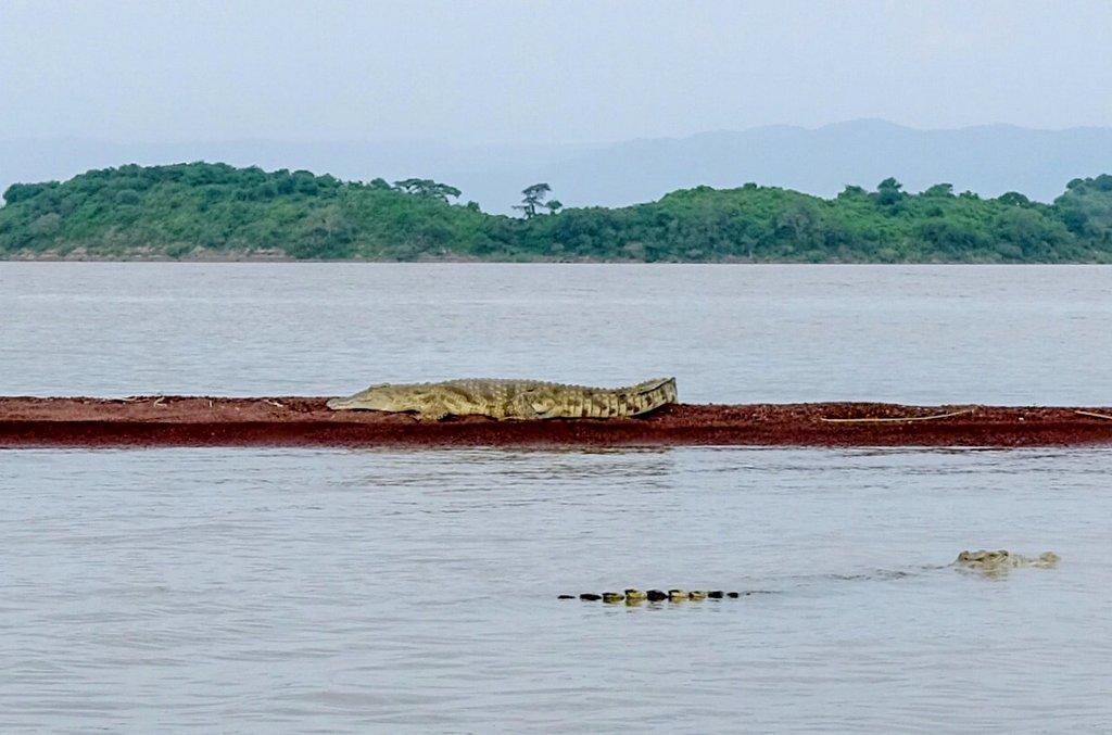 Krokodil-Aethiopien-Lake-Chamo