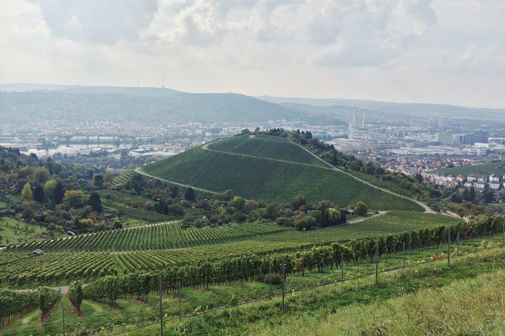 Stuttgart-Tipps-Rotenberg-Weinberge