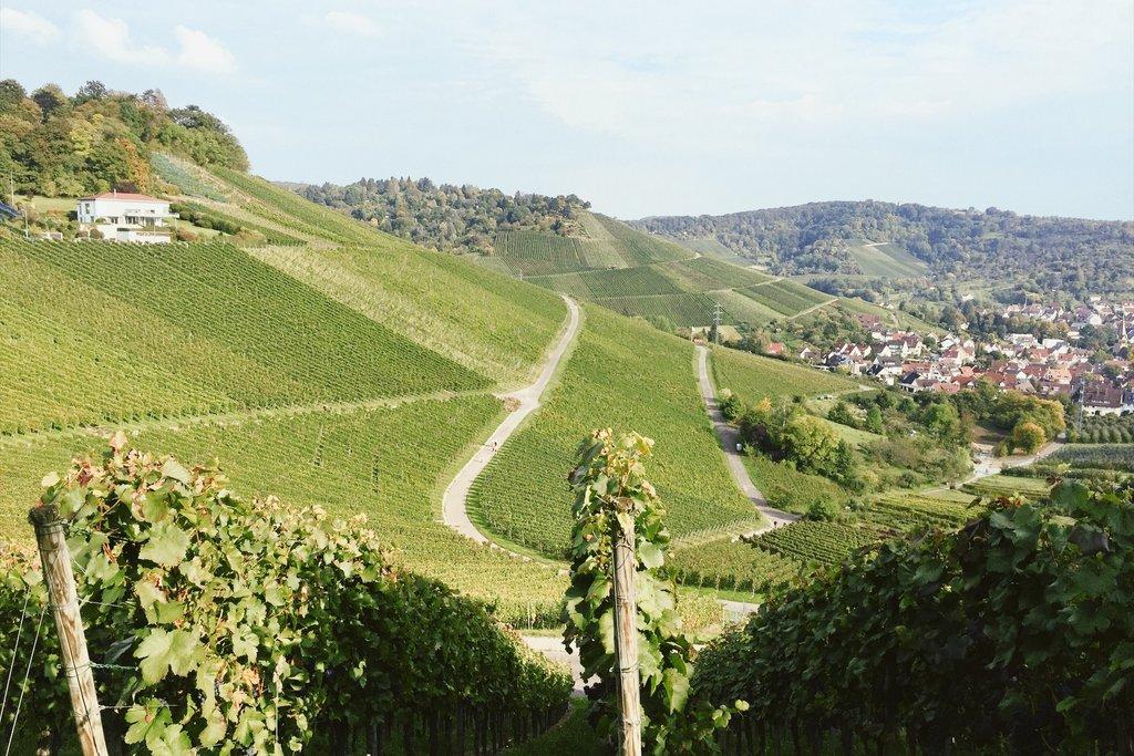 Stuttgart-Weinberge-Rotenberg