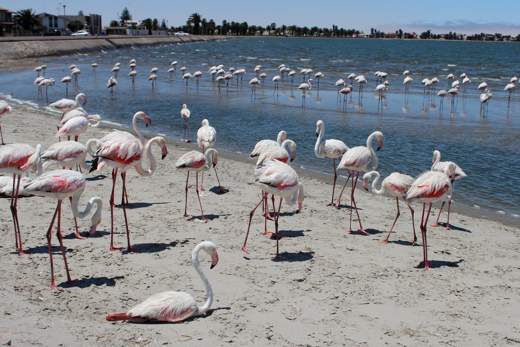 Walvis Bay Namibia Flamingos Lagune