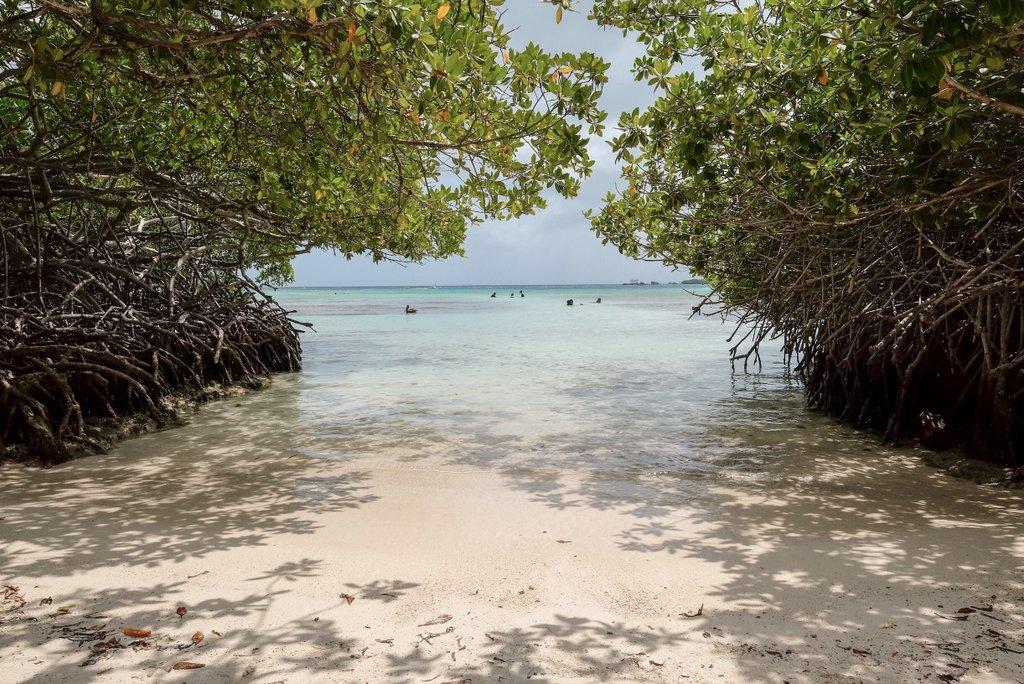Aruba-Mangroven-Tour-Mangel-Halto