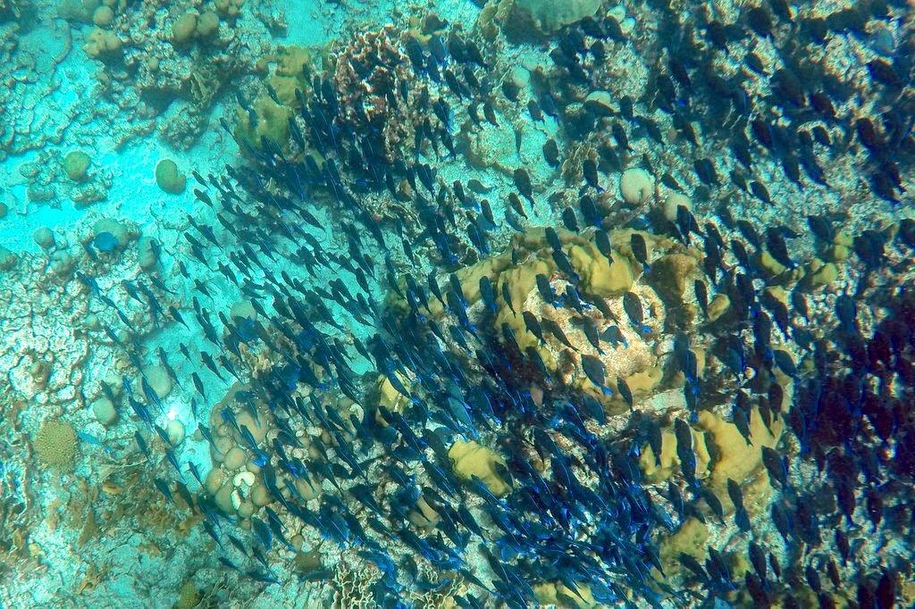 Aruba schnorcheln tauchen