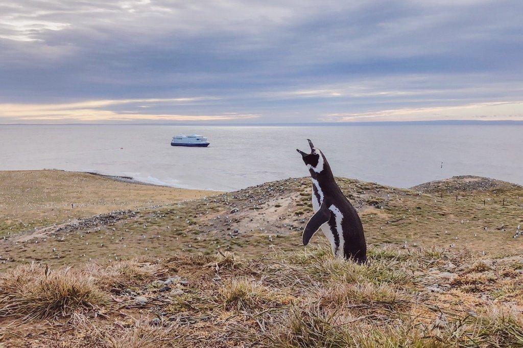 Magellan-Pinguin-Isla-Magdalena-Chile