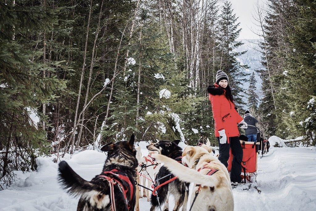 Jasper-Nationalpark-Hundeschlitten-selber-lenken