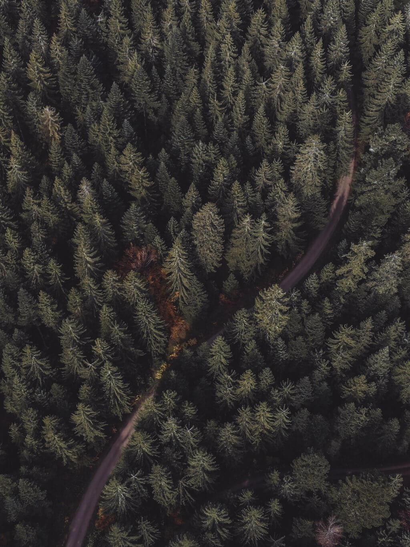 Schwarzwald Baeume Wald Drohne