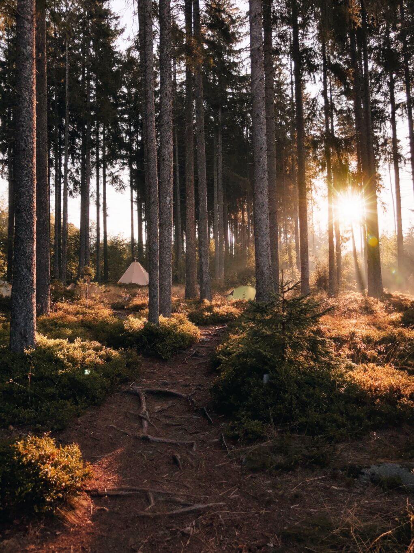 Schwarzwaldcamp am Schluchsee