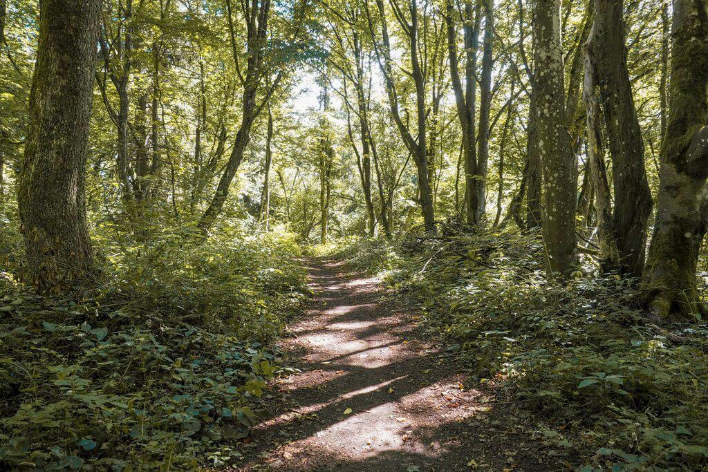 Waldweg wandern Kaltes Feld