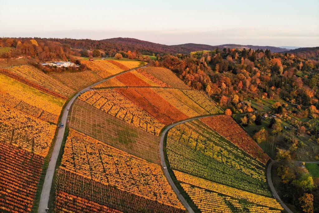 Stuttgarter Weinberge im Herbst