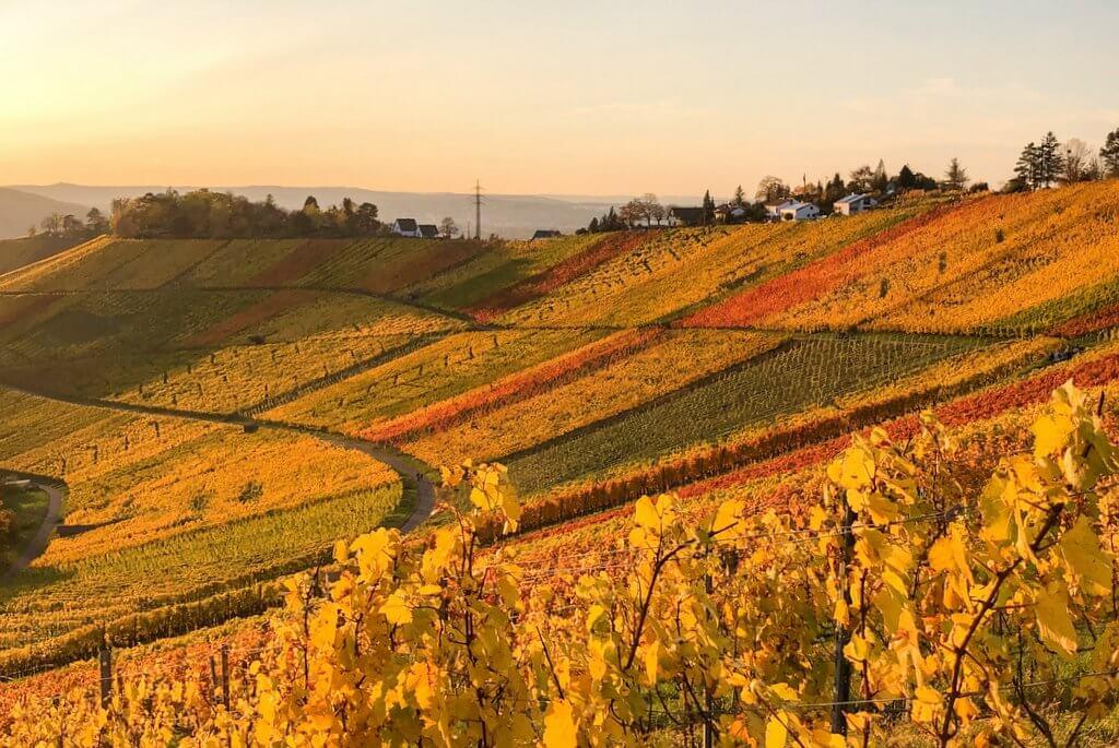 Stuttgarter Weinwanderweg Rotenberg Uhlbach