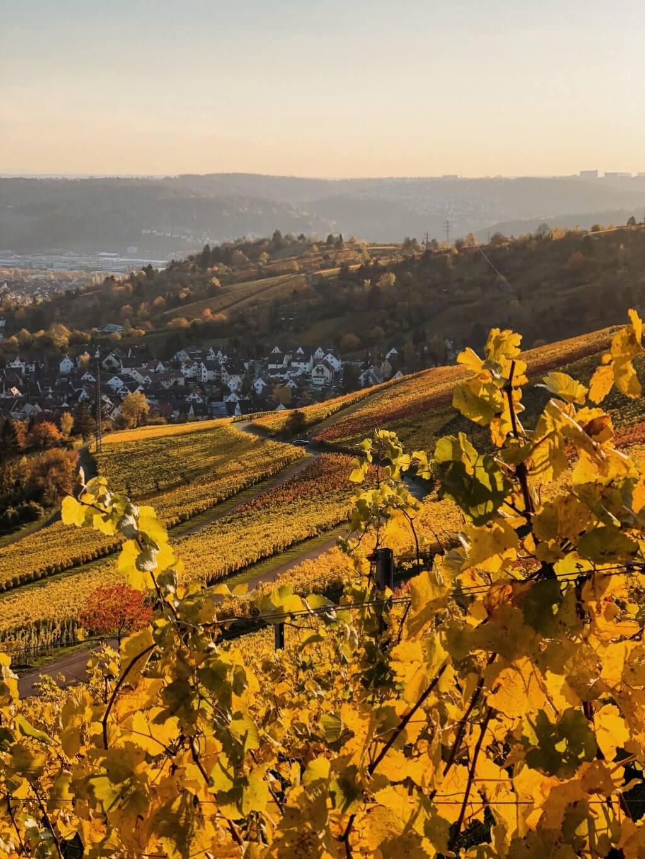 Weinberge Rotenberg Herbst