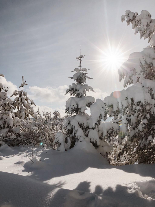 Verschneite Bäume Schwäbische Alb